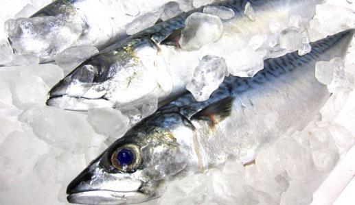 DHAやEPAが含まれる魚の画像