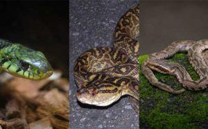 毒蛇に噛まれた男児が重体! 日本に生息している毒蛇を把握しておこう